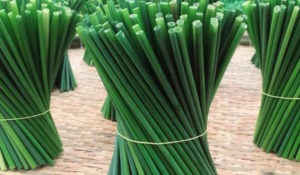 How-grass-straw-are-made