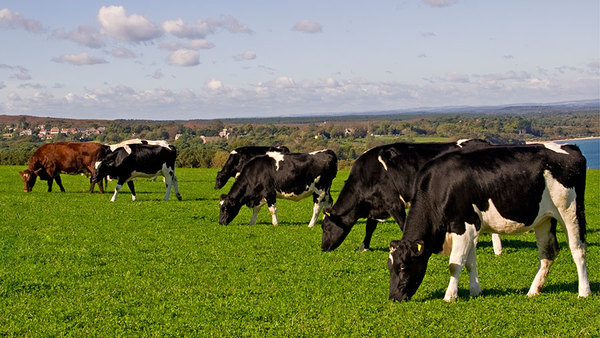 Vegan-Society-condemns-threats to-livestock-agriculture