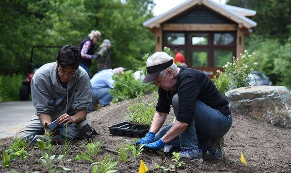 environmental-volunteer