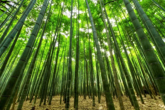 Bamboo forest bamboo straws
