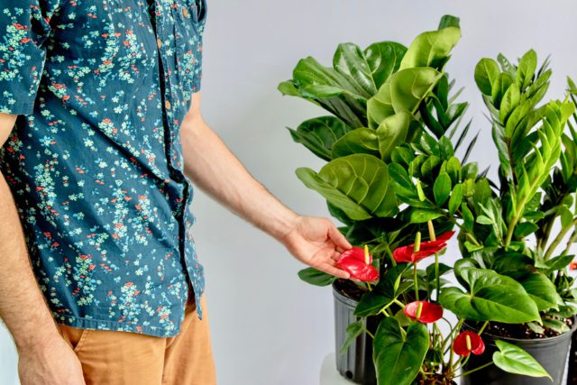 lively root plant coupon
