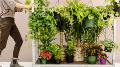 lively root plant reviews