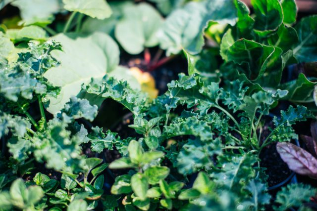 Grow your own sustainable garden