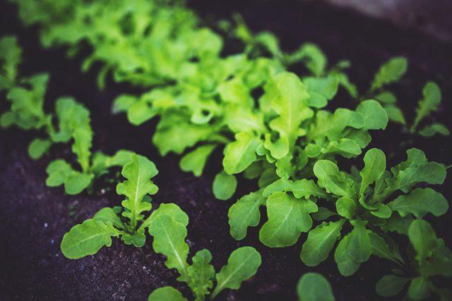 Grow organic products